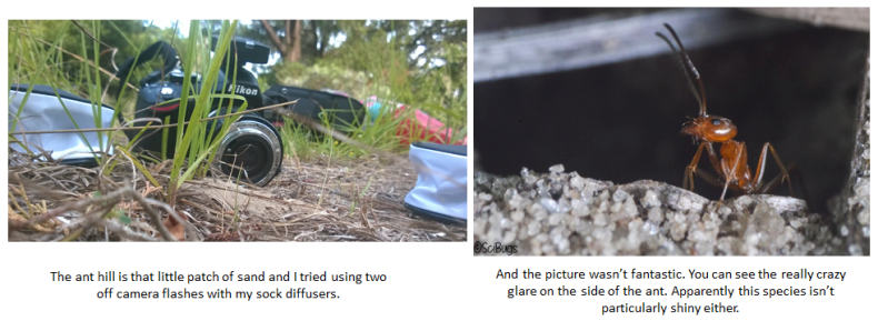 This was the setup which gave me a not so great picture of the ant. Despite the obvious hot spots, the picture is really dark in some places and the sand looks really washed out in the front.