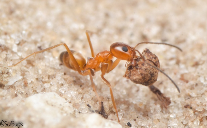 This came out a lot nicer because the sand and the ant are nicely lit.