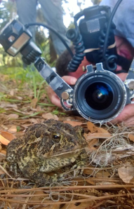 Capturing the background lets us in on the toad's world.